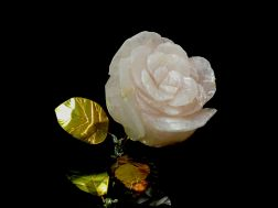 blossom rose-rose
