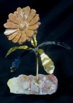 daisy br m - pk m with pk opal