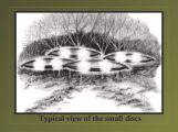 slideshow 63 jpg