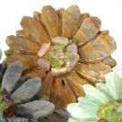 butterscotch onyx blos